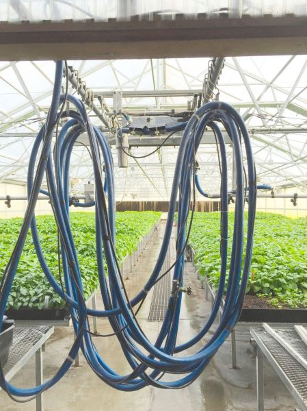 GMX Units On Greenhouse. Installing the units on the main feed line. By doing this, as the water goes through the magnetic field it keeps the minerals in suspension and reduces the surface tension of the water. Thus, the plants better absorb the water and their growth is enhanced.